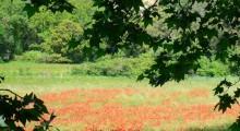 Gite capelier (3)